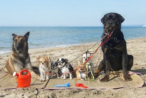 group of purebred dogs on the beach